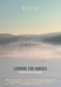 looking for horses